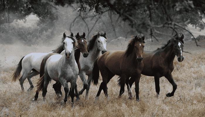 Los mejores caballos de polo