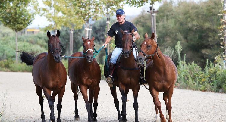 Petiseros en Horses
