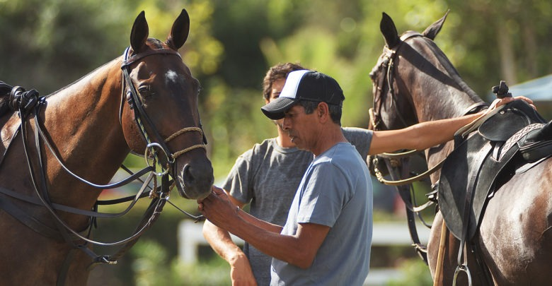 Cuidador de caballos