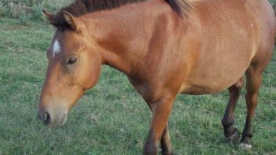 Horses Criollo