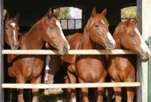 Crianza de caballos y la función del petisero en ella